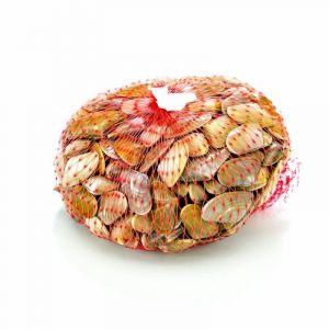 Coquina     granel