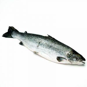 Salmon fresco pieza entera de 2-3 kilos