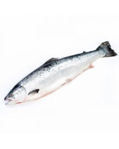 Salmon entero (aprox. 4-6kg)
