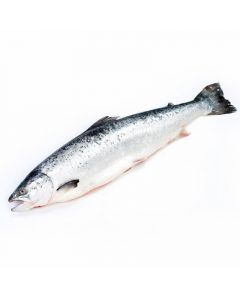salmón entero (aprox. 4-6kg)