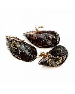 Mejillones mediano granel