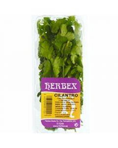 Cilantro herbex 25g